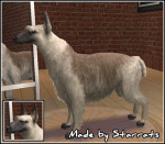 Llama Dog Preview