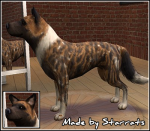 African Wild Dog Preview