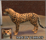 Pet Cheetah Preview
