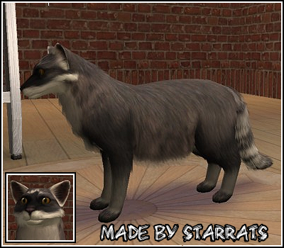 Pet Raccoon Preview