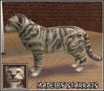 Pet White Tiger Preview