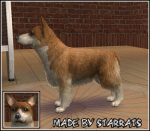 Welsh Corgi Pembroke Preview
