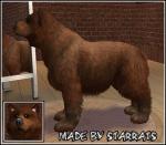 Brown Bear Preview