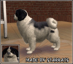 Japanese Chin Preview