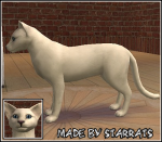 Foreign White Cat Preview