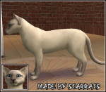 Lilac Point Siamese Cat Preview
