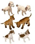 Puppy Pack Preview