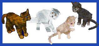Cat Pack Preview